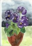 lila Veilchen im Topf