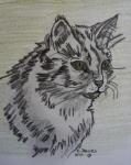 wilde Katze.JPG