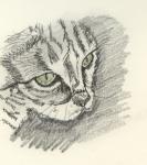 Katzenköpfchen.jpg