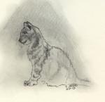 Katze sitzend1.jpg