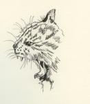 Katze fauchend.jpg