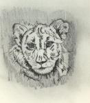 Löwenbaby.jpg