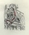 Pferdchen im Stall.jpg