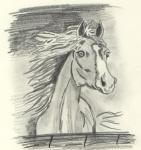 Pferdchen.jpg