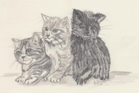 drei kleine Kätzchen.jpg