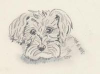 Hund Wuschel.jpg