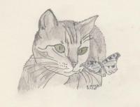 Katze mit Schmetterling.jpg
