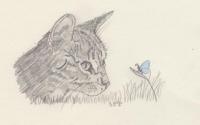 Katze mit Schmetterling1.jpg