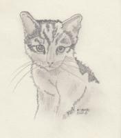 Katze weiß.jpg