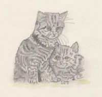 Katze zwei.jpg
