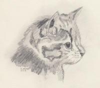Katzenkopf seitlich.jpg