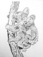 Koalabären