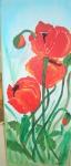 drei rote Mohnblumen