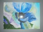 blaue Mohnblüte