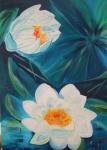 weiße Seerosen