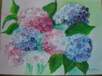 rote und blaue Hortensien