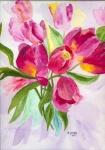 pinkfarbene Tulpen
