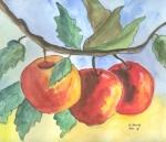Äpfel Trilogie I - noch am Baum hängend