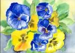 blaue und gelbe Stiefmütterchen